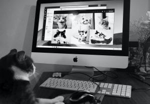 Even cats like to meet via Zoom Skype to find their next teaching job abroad!